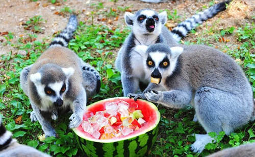 小动物们吃冰防暑乐悠悠