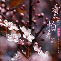 春天赏花摄影技巧