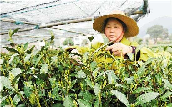 农业生产上预防倒春寒
