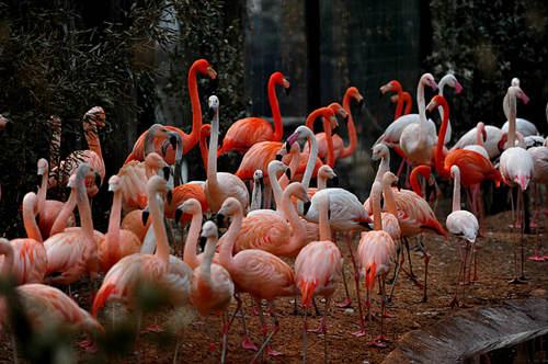 北京动物园—和小动物亲密接触