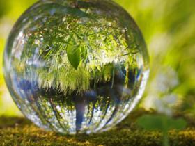 全球绿化面积增加5%