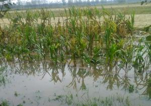 河南驻马店暴雨来袭 农田被淹