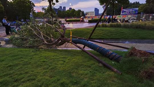 南宁遭遇强对流 大树被风吹倒