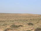 内蒙古部分地区8月下旬有望缓旱