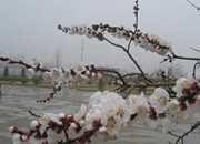 山西中南部48县市春雨滋润 部分地区干旱缓和