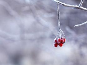 小雪节气习俗知多少?