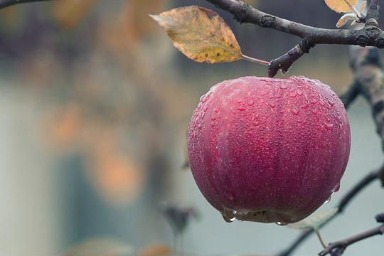 秋天为啥要多吃发酵食品?