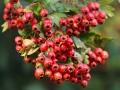 秋冬季节健脾消食常吃5种食物