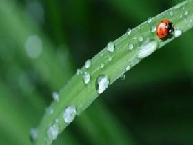 雨水节气除了食补还需注意哪些?