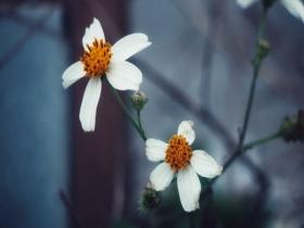 春季养生防过敏七项注意