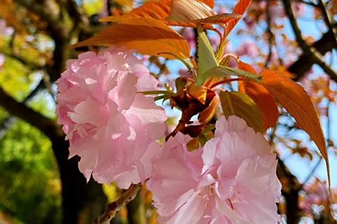 花粉柳絮小虫 关于春天冷知识了解一下