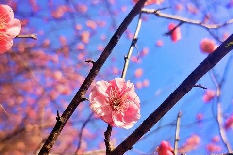 又到一年春花烂漫时 花粉过敏如何防范?