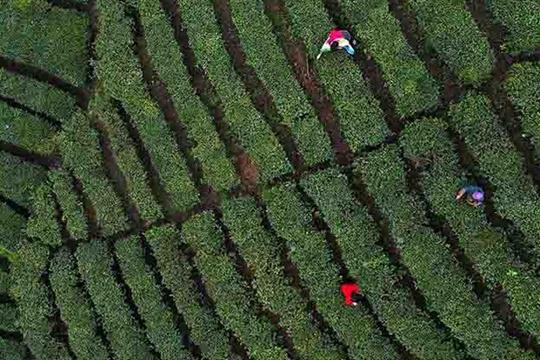 茶煎谷雨春