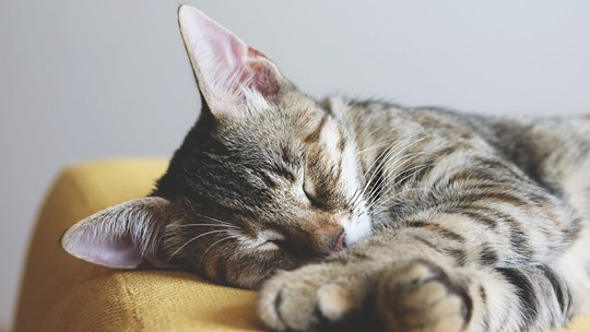 夏秋交替 每天多睡1小時利養生