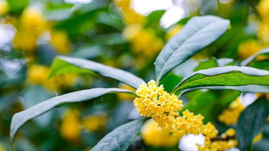秋游时节警惕秋季花粉过敏