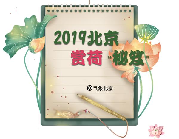 """2019北京""""赏荷""""秘笈"""