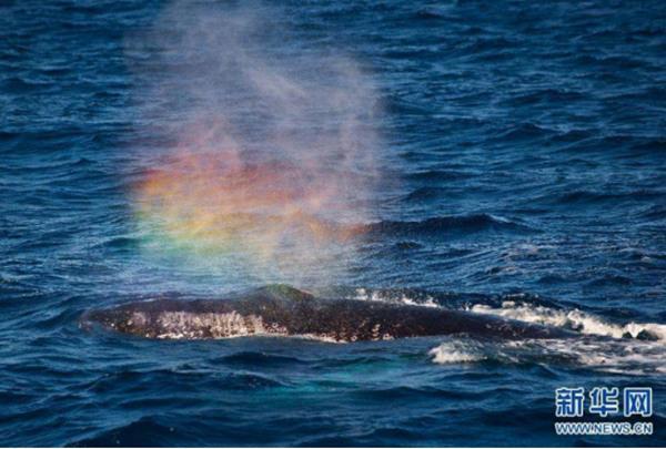 鯨噴彩虹da.jpg