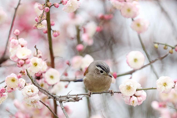 春节假期中东部气温起伏大 南方阴雨频繁