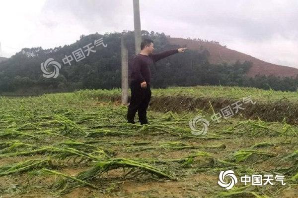 广西今天进入降雨最强时段 局地有大暴雨