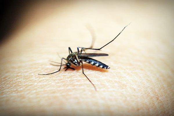 蚊子出没请注意!扒一扒那些奇葩的防蚊神器