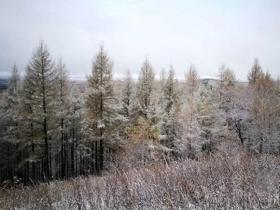 下雪了!河北承德塞罕坝林场迎来今秋首场降雪