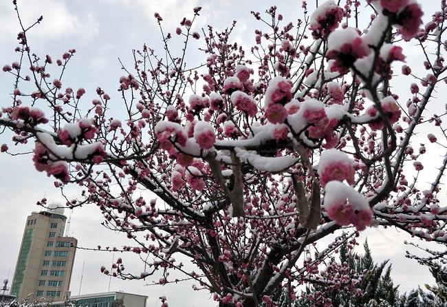 全国大部雨雪收敛气温回升 华北黄淮霾再发展
