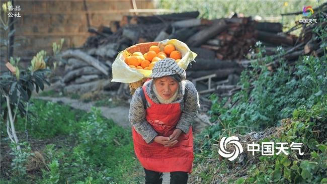 战疫扶贫·中国天气精选多渠道助力四川雅安石棉黄果柑销售