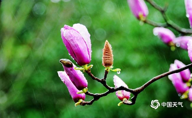 http://i.weather.com.cn/images/cn/news/2020/03/27/1585316693886088797.jpg