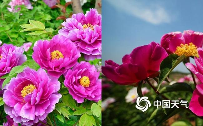 周末北方大部回暖花开正好 赏花达人速成秘诀看过来