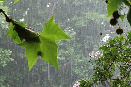 山东今明两天仍多雷雨天气 局地阵风可达7至8级