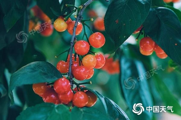 立夏节气夏季版图迅速扩张 万物生长最宜品尝时鲜