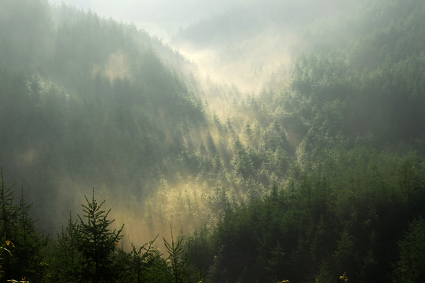 中国(重庆)气候旅游目的地--巫山摩天岭森林小镇