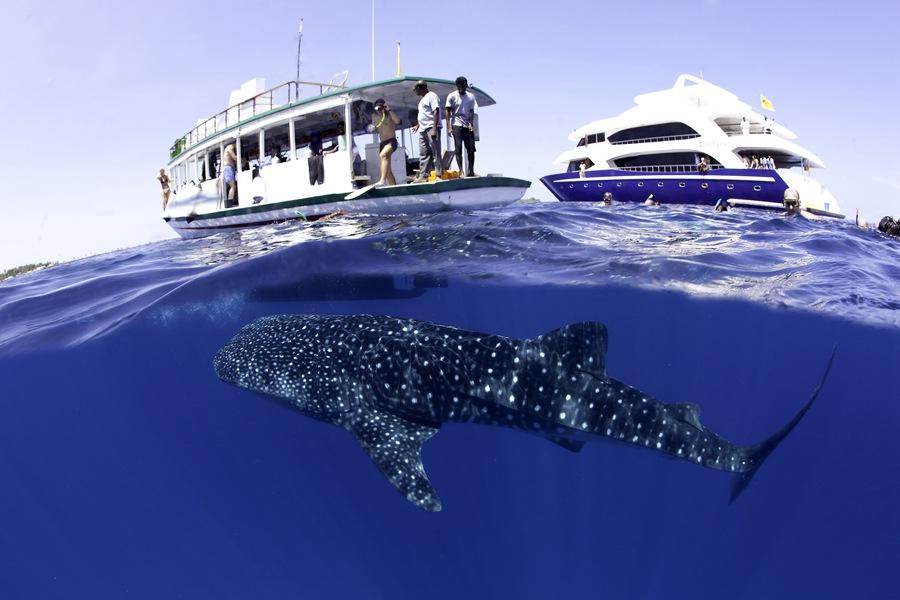 摄影师走访各地水域 记录水下水上两个世界