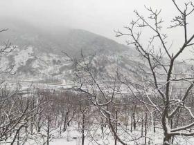 天津蓟州迎飞雪 一派北国好风光