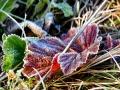 """植物穿上""""白绒衣"""" 内蒙古新巴尔虎左旗出现霜冻"""
