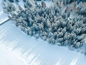 航拍新疆阿勒泰可可托海的松与雪