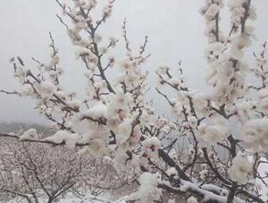 """北京郊区四?#36335;?#38634; 香山?#19968;?#25140;上雪""""帽子"""""""