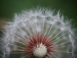 换个角度看春天 微距下的花花世界别样精彩