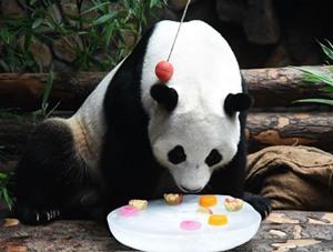 大熊貓:空調房里樂享清涼一夏