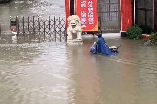 """台风""""韦帕""""来袭 海口积水严重大树倒伏"""