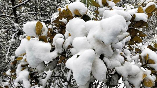 云南香格里拉等地迎來2020年第一場雪