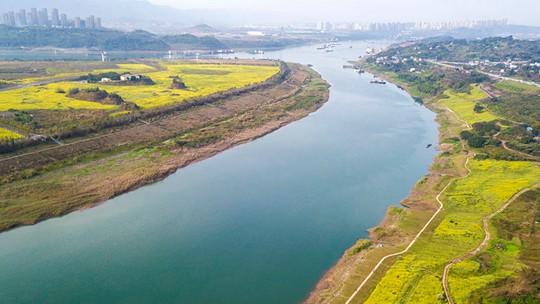 重庆:春风拂长江 两岸披上油菜黄