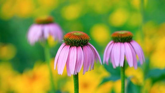 在炎炎夏日里看花开成海 收获夏日小确幸