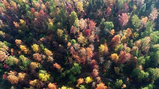 層林盡染 重慶酉陽五彩林進入最佳觀賞季