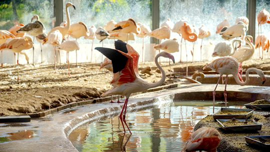 北京動物園火烈鳥園區美如仙境