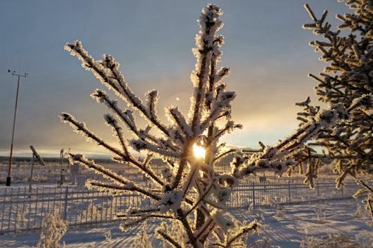 內蒙古圖里河現雪淞景觀 陽光下銀光閃爍