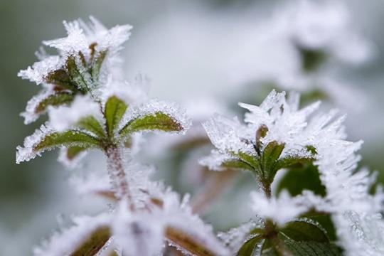绿植穿戴霜花 若隐若现呈现朦胧美