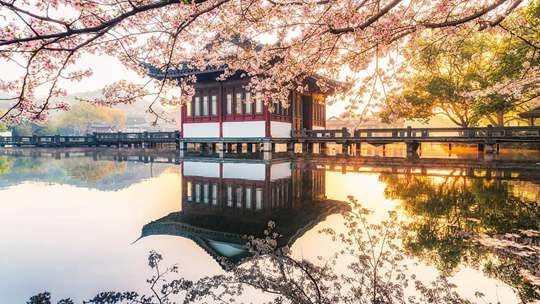 当古式建筑遇上春天 居然美到极致