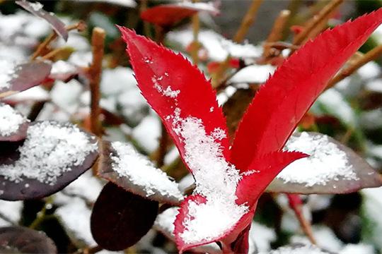 贵阳迎2019年第一场降雪 飞雪如鹅毛