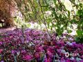 进入数九寒冬,全国大部分地区进入冰冻模式,但是四川攀枝花由于特殊的地理环境,入冬以来基本保持晴好天气。正处于最寒冷的小寒时节,攀枝花仍旧是阳光灿烂,温暖如春,鲜花齐放,让寒冷的冬天与众不同。图片拍摄于四川攀枝花。(文/肖寒  图/赖富蓉  拍摄时间/2019年1月14日)